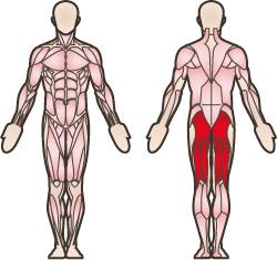 Becken muskeln Becken (Anatomie)